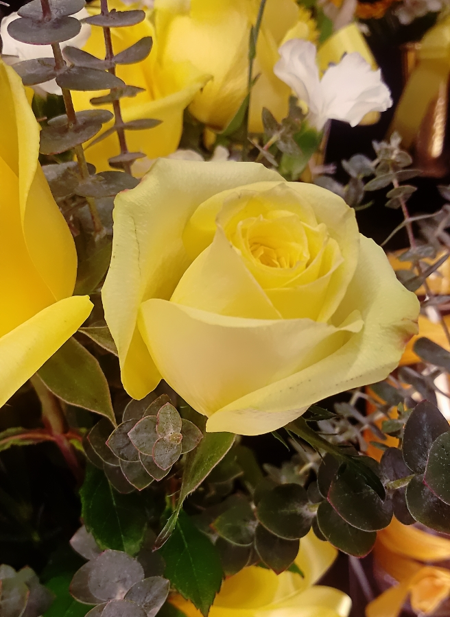 00-yellowrose-900-20180311_144545A